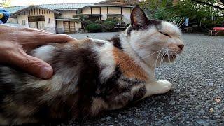 近くに擦り寄ってきて必ず後ろ向きに座る猫がカワイイ