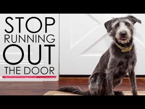 Teach Your Dog To Stop Running Out The Front Door Siberian Husky