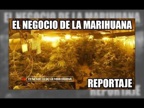 El Negocio De La Marihuana - Aduanas SVA