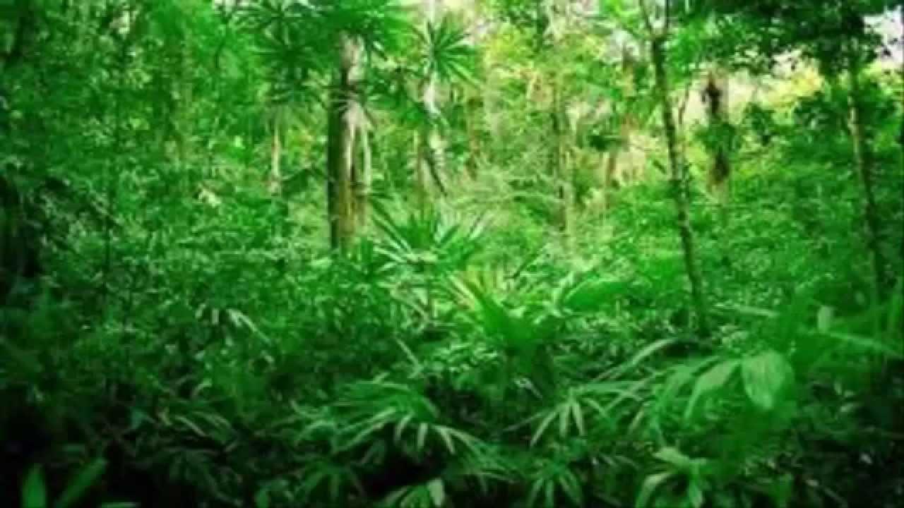 Cancin TRoLL de la jungla XD YouTube