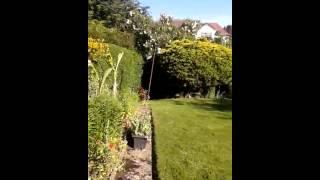Schnauzer Greenhouse Leeds Uk