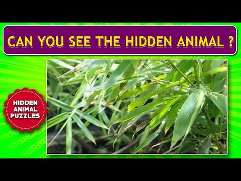 Can you find The Hidden Animal - 10 photos Puzzle #1 - Optical Illusions । Brain Teasers