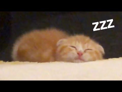 まるおの寝顔がかわいすぎる件…【まるおの成長日記 #3】【ヒカキンTV】