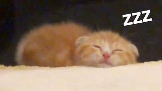 まるおの寝顔がかわいすぎる件…【まるおの成長日記 #3】【ヒカキンTV】 thumbnail