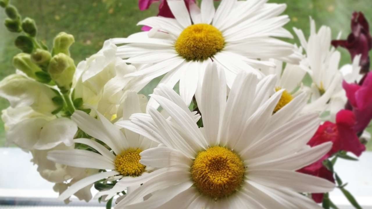 How To Collect Seeds From Flowers Diy Crafts Tutorial Guidecentral