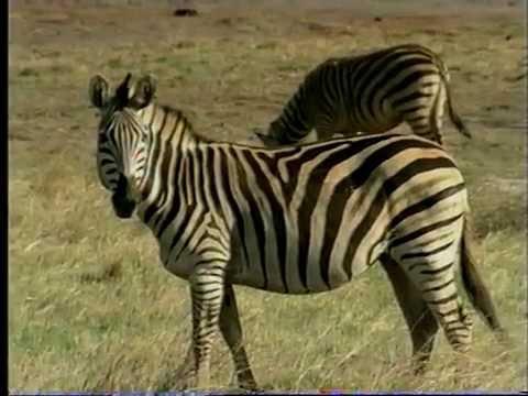 Zimbabwean Wildlife - wish you were here - Thames Television