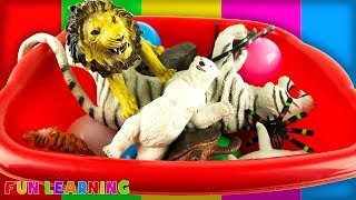 Lots of Wild Animals Toys For Children with Box of Toys and Learning Colors