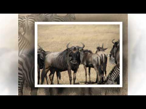 Tanzania 2012 - Landscape pictures