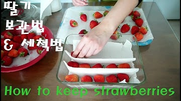 How to keep strawberries fresh 딸기 보관법 최대한 오래 보관 방법