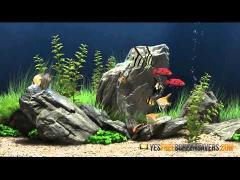 3D Aquarium Screensaver - Free Aquarium Screensaver In 3D