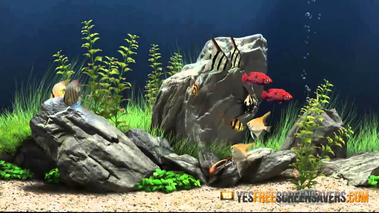 3d Fish Aquarium Live Wallpaper For Pc 3d Aquarium Screensaver Free Aquarium Screensaver In 3d