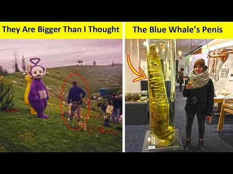 Things You Never Knew Are That Big (NEW PICS!)