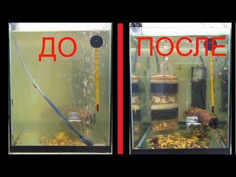 Вопрос: Почему вода в аквариуме может помутнеть уже на второй день?