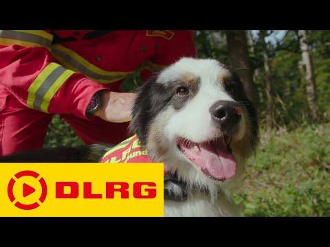 Rettungshunde der DLRG (Helfer auf vier Pfoten)