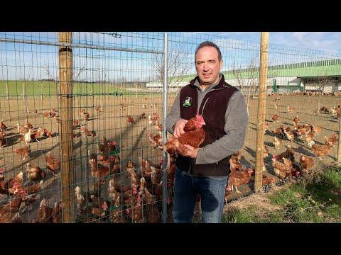 Michel, producteur Potager City d'oeufs Bio dans le Rhône, vous présente ses poules