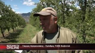 Το KOZANI.TV ONLINE στο Μεσοβούνο και το Βελβεντό