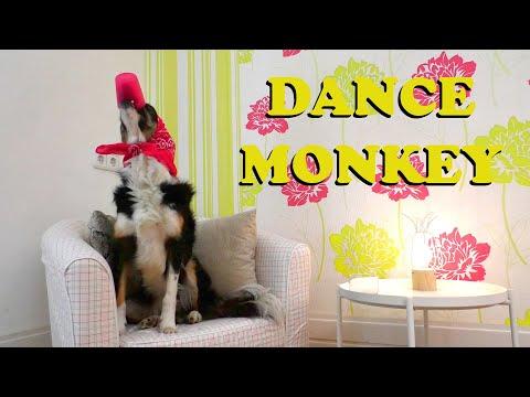 Tones and I - Dance Monkey || Dog Tricks Video