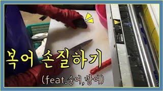 복어 손질하기(feat.숭어, 방어) in 강원 속초