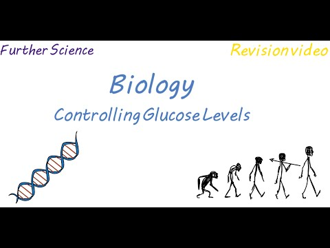 B3: Controlling Glucose Levels (Revision)