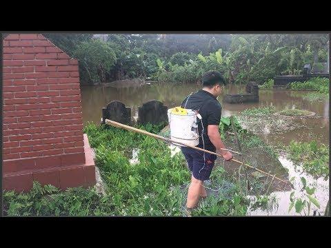 Đánh cá bằng kích điện tại nghĩa địa và cái kết - Chích điện cá lóc