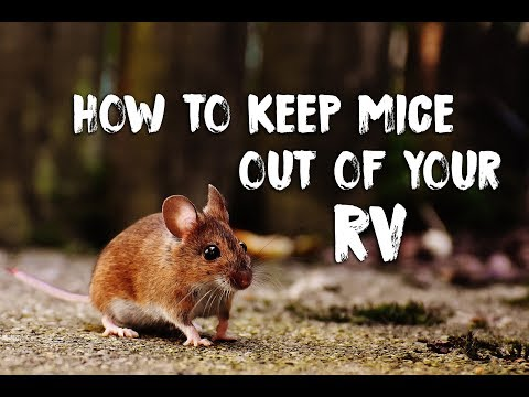 how-to-prevent-mice-in-your-rv-&-deal-with-their-mess