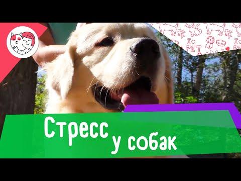 5 признаков собачьего стресса