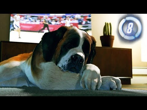 Detroit: Become Human - Part 8 - ALWAYS pet the dog..