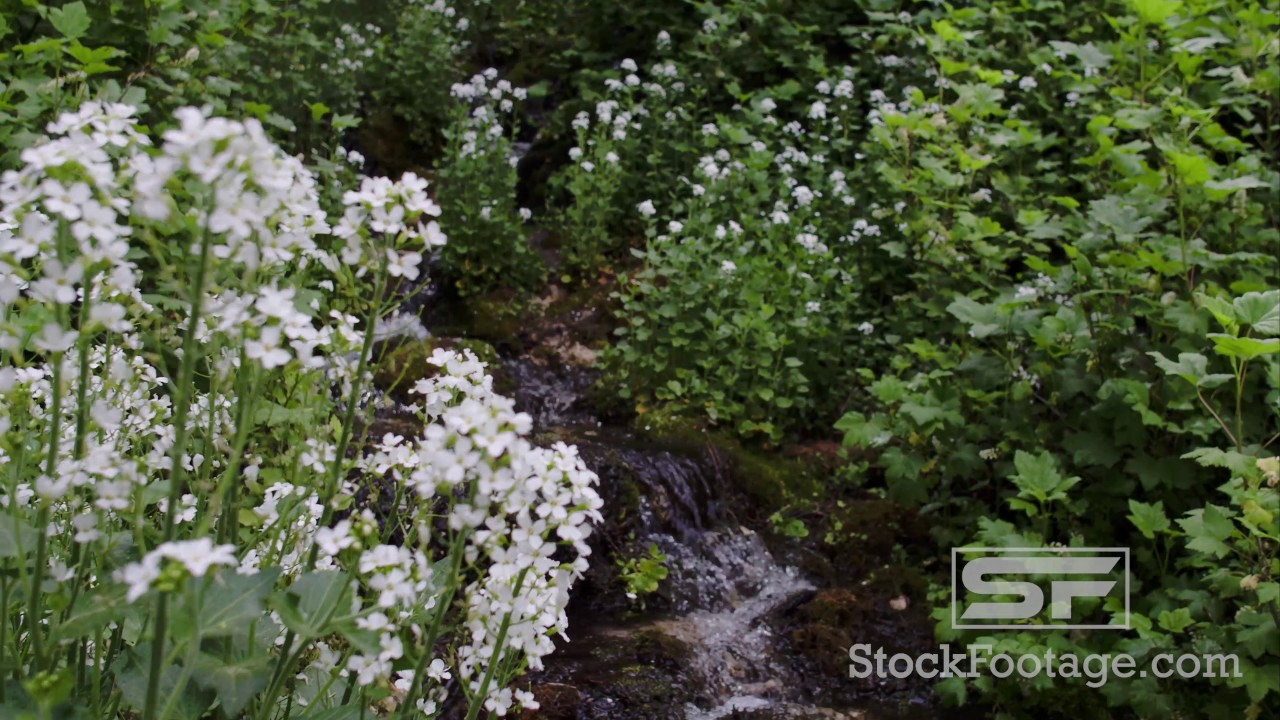 Floating View Over Green Plants With White Flowers Youtube