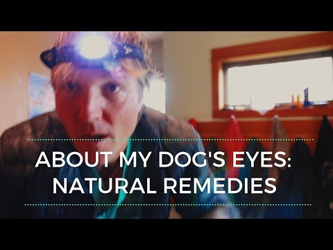 About My Dog's Eyes...Effective Natural Remedies