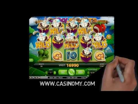 No Download Casino No Deposit Bonus