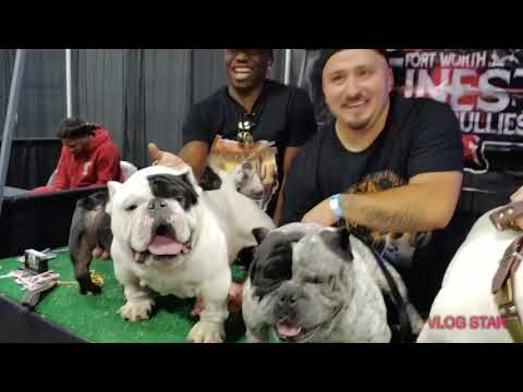 Exotic Bully Show Of The Year