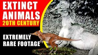 Extinct Animals 20th Century! Extremely Rare and Moving Footage of Extinct Animals