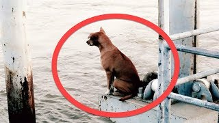 dog fell off a boat waited in this spot 4 months for her family to return