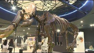 Гиганты Вечной Мерзлоты: в Сочи открылась выставка первобытных животных