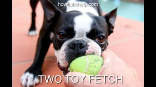 How to train your dog to play an awesome game of fetch and have a reliable drop on cue.