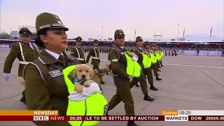 New army & police recruits - puppies (Chile) - BBC News - 21st September 2018