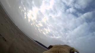 Honey at Barry Island with the GoPro Thumbnail