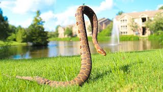 Caught Venomous Snake While Fishing!! (Dangerous)