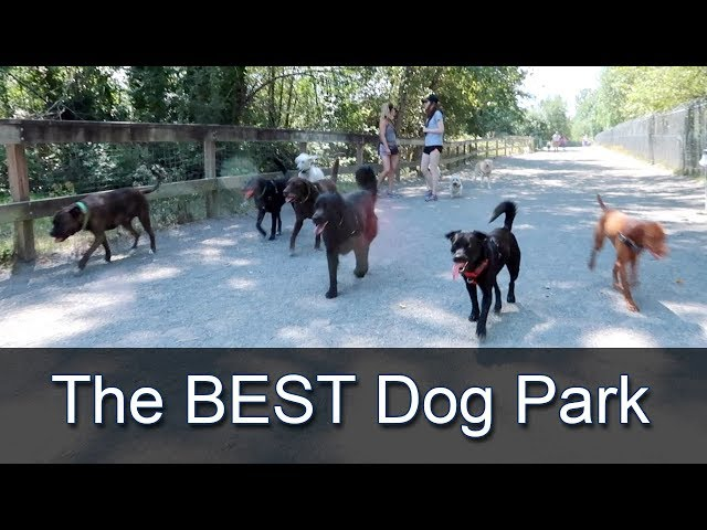 Warren G. Magnuson Dog Park in Seattle