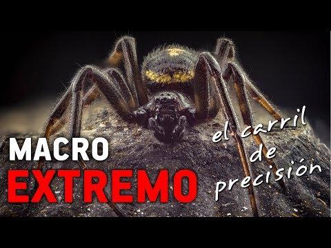 Fotografía MACRO EXTREMO