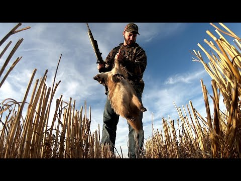 Hunting The American Badger