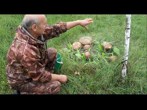 Лесные грибы на