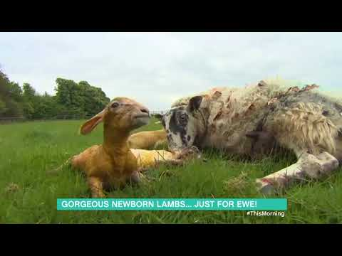 Sarah Greene Visits Some Newborn Lambs | This Morning