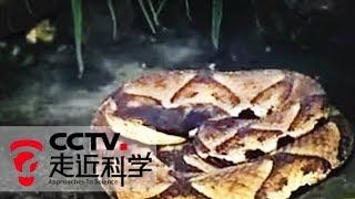 《走近科学》 20141209 寻找巨型五步蛇   CCTV走近科学官方频道