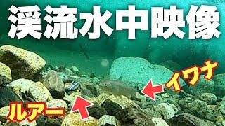 Goproを渓流に沈めたら・・・綺麗な渓流の魚と水中映像映ってました。