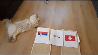PREDIKSI SERBIA VS SWISS VERSI KUCING || FIFA WORLD CUP 2018 RUSSIA