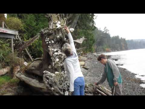 Driftwood on Beach Full of SeaShells
