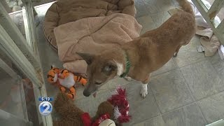 Pet-friendly Shelters At The Ready For Hurricane Season