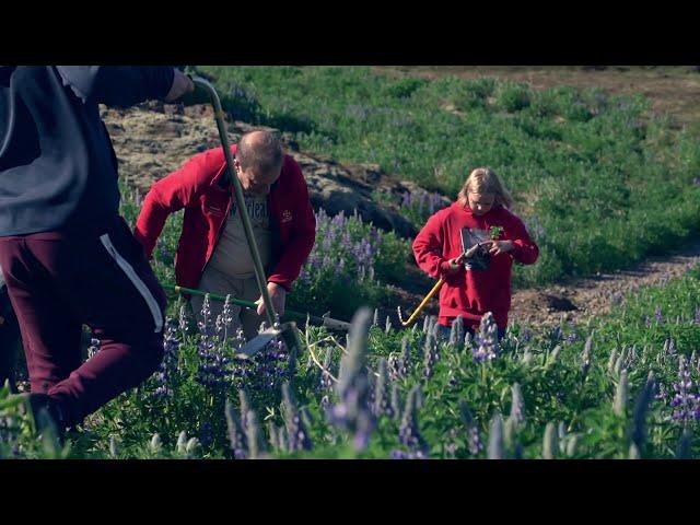Skjótum rótum - 13.000 græðlingum skotið niður um allt land 2020