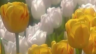 Видеосопровождение к песне Весна пришла(футажи, видео для монтажа и визуальное сопровождение различных мероприятий., 2017-03-01T07:26:11.000Z)